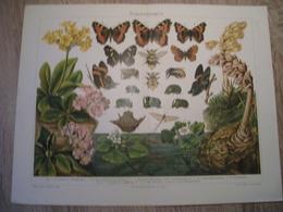 CHROMO-LITHOGRAPHIE AUS MEYER'S LEXIKON 1895 DARWINISMUS - Lithographies