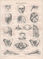 LITHOGRAPHIE AUS MEYER'S LEXIKON 1895  SKELETT DES MENSCHEN - Lithographies