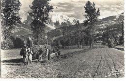 74 - SALLANCHES - Belle Vue  Animée Rare , Chaîne Du Mont Blanc (attelage Avec Cheval , Paysans Qui Ramassent Le Foin ) - Sallanches