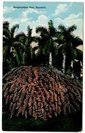 United States Vintage Postcard Bougainvillea Vine - Honolulu, Hawaii - Honolulu
