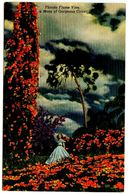 United States Vintage Postcard Florida Flame Vine - Cypress Gardens, Florida - Other