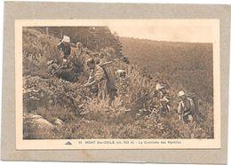 MONT SAINTE ODILE - 67 - La Cueillette Des Myrtilles - LYO1/SAL - - Sainte Odile