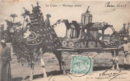 ¤¤   -  LE CAIRE   -  Mariage Arabe  -  Chameau    -  ¤¤ - Cairo