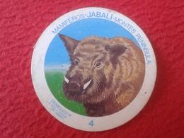 SPAIN ESPAGNE. ANTIGUO OLD CROMO ESTAMPA 4 CROMOJUEGO 1982 MAMÍFEROS JABALÍ WILD PIG MONTES PENÍNSULA VER FOTO/S Y DESCR - Cromos