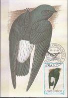 "745 S. Tomè E Principe 1983 Birds FDC Chaetura Thomensis "" Rondone Tome ""  Endemico Maximum Card Maxi - Swallows"