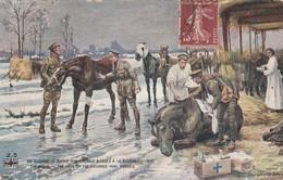 Militaria : Soins Aux Chevaux Blesses à La Guerre : - War 1914-18