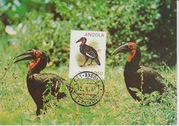 Carte Maximum 1984 Oiseaux Bucorvos 689A - Angola