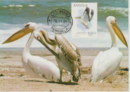 Carte Maximum 1984 Oiseaux Pelecanus 689D - Angola