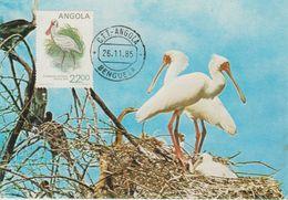Carte Maximum 1984 Oiseaux Platalea 689E - Angola