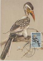 Carte Maximum 1967 Oiseaux Toucan 176 - Botswana (1966-...)