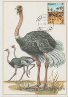 Carte Maximum 1982 Oiseaux Autruche 454 - Botswana (1966-...)
