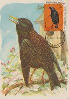 Carte Maximum 1970 Oiseaux Yv  396 - Burundi