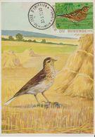 Carte Maximum 1970 Oiseaux Yv 401 - Burundi