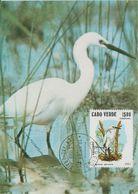 Carte Maximum 1981 Oiseaux 450B - Cap Vert