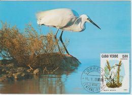 Carte Maximum 1981 Oiseaux 450B - Islas De Cabo Verde