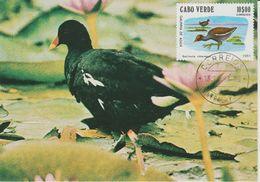 Carte Maximum 1981 Oiseaux 450E - Islas De Cabo Verde