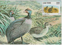 Carte Maximum 1981 Oiseaux 450F - Islas De Cabo Verde