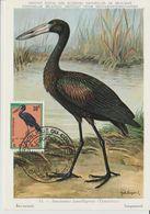 Carte Maximum 1963 Oiseaux Bec Ouvert 483 - République Du Congo (1960-64)