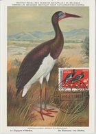 Carte Maximum 1963 Oiseaux Cigognes 484 - République Du Congo (1960-64)