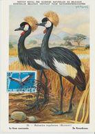 Carte Maximum 1963 Oiseaux Grues Couronnées 493 - République Du Congo (1960-64)
