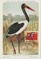 Carte Maximum 1963 Oiseaux Jabirou 494 - République Du Congo (1960-64)