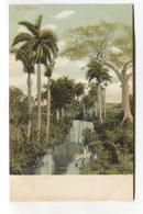 Cuba - All Tropical, River, Trees - Early Postcard - Cuba