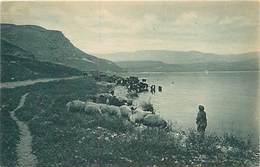 D-18-909 : GALILEE - Palestine