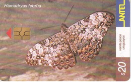 248 TARJETA DE UNA MARIPOSA DE URUGUAY HAMADRYAS FEBRUA (BUTTERFLY) - Farfalle