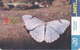 246 TARJETA DE UNA MARIPOSA DE URUGUAY MORPHP CATENARIUS (BUTTERFLY) (GHIP G-5 ROJO) - Farfalle