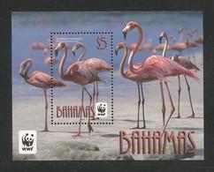 2012 Bahamas WWF Caribbean Flamingo Souvenir Sheet (** / MNH / UMM) - Ongebruikt
