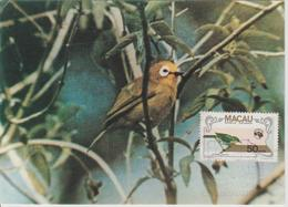 Carte Maximum 1984 Oiseaux  497 - Macao
