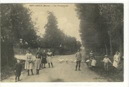 Carte Postale Ancienne Sept Saulx - Les Promenades - France