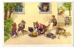 Chats 7 - Katten