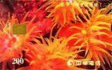 = TAIWAN - IC 9017  =  MY COLLECTION - Taiwan (Formosa)
