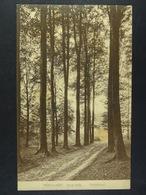 Hoeilaart Sous-bois Onderhout - Hoeilaart