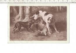 DIER 036 - CHIEN - DOG - HOND - - Hunde