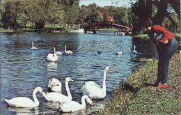 Canada > Ontario > Stratford, Feeding The Swans On The Avon River, Bridge,  Used - Other