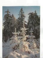 Postcard - Winter Scene Photo By Erhard Jorde - Unused Very Good - Unclassified