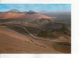 Postcard - Lanzarote - Camels Caravan Card No. 20069 - Unused Very Good - Unclassified