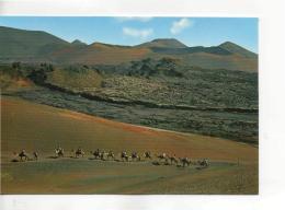 Postcard - Lanzarote - Camels Caravan Card No. 20139 - Unused Very Good - Unclassified