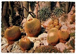 Monaco Modern Postcard Cacti Plants In Exotic Garden - Exotic Garden