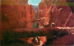 CPSM Bryce Canyon                    L2641 - Bryce Canyon