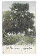 Tilff (Pr.Lg)  ( M 4245 )   Le Tilleul Séculaire  ( Colorisé ) - Esneux