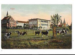 Eupen  ( M 4225 )  Des Vaches Dans Le Prairie ( Carte En Couleur ) - Eupen