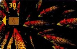 TARJETA TELEFONICA DE DINAMARCA. TDD004O, Fish; SN 7503 (078) - Dinamarca