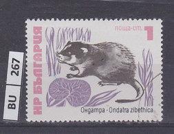 BULGARIA   1973animali 1 St Usato - Gebraucht