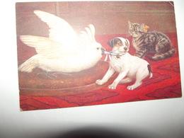 Cpa Animaux CHAT CHIEN PERROQUET Superbe Carte  édition Oilette De TUCK RAPHAEL N°9765 - Tuck, Raphael