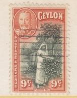 Ceylon 267   (o)  PLUCKING  TEA - Ceylon (...-1947)