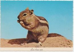 Squirrel, Love Those Nuts, Unused Postcard [21420] - Animaux & Faune