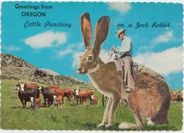 Greetings From OREGON, Cattle Punching On A Jack Rabbit, 1962 Unused Postcard [21428] - United States